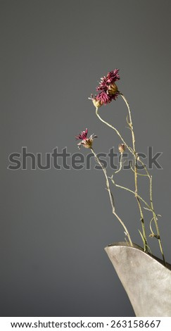 Dry red flowers of the centaurea family in a metal vase - grey background - still life - stock photo
