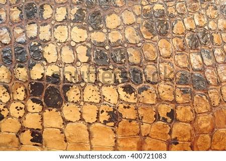 dry skin texture of crocodile alligator - stock photo