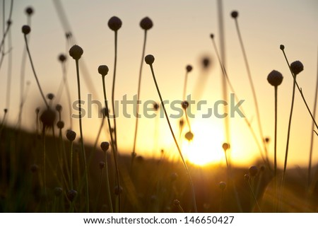 Dry spare of grass in sunset dawn - stock photo