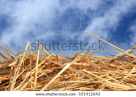 dry straw texture and blue sky, useful for backgrounds - stock photo