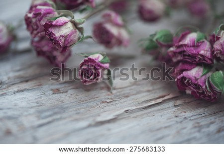Dry tea roses on the old wood background - stock photo