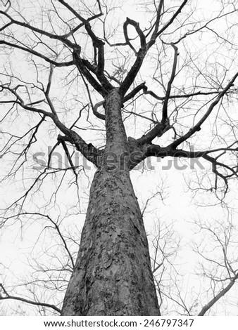 dry tree - stock photo