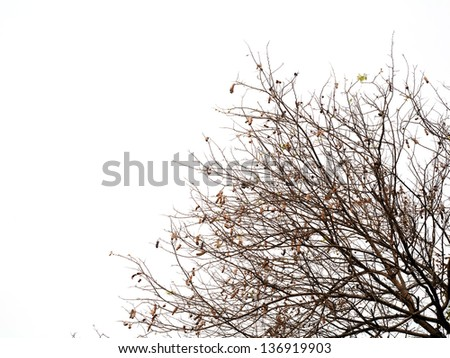 Dry tree branches isolated on the white background - stock photo