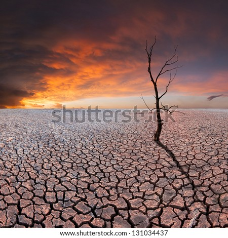 Dry tree on dry earth, majestic clods in the sky, ecology disaster - stock photo