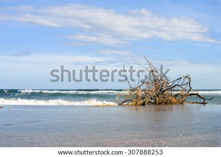 Dry tree rests on the Pacific beach of Las Penitas near Leon, Nicaragua. It was brought in to the coast after huge waves hit the Pacific shore in May 2015 - stock photo