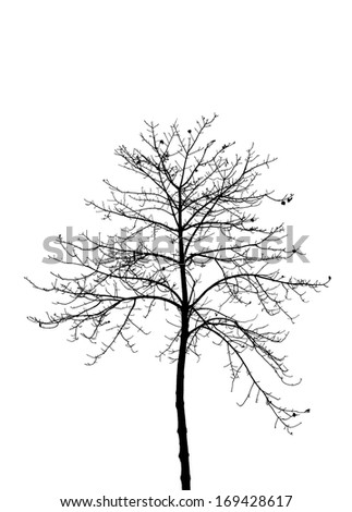 Dry tree silhouette isolated on white background - stock photo