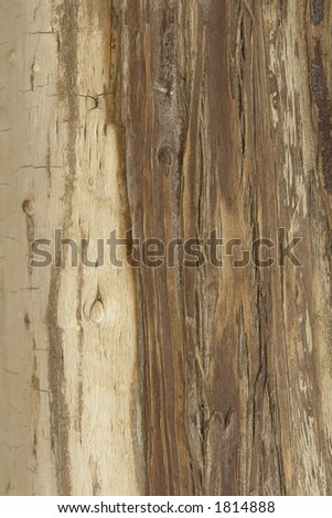 Dry wood. - stock photo