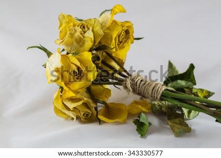 Dry yellow roses - stock photo
