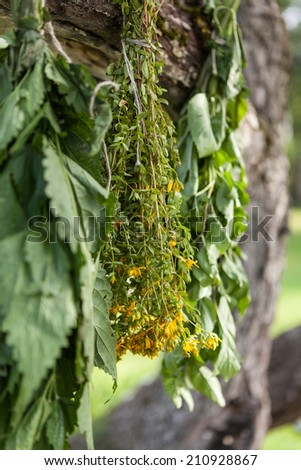 Drying fresh medical herbs in a shadow. - stock photo