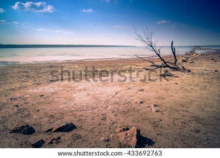 Drying lake and dead tree with stone in front - stock photo