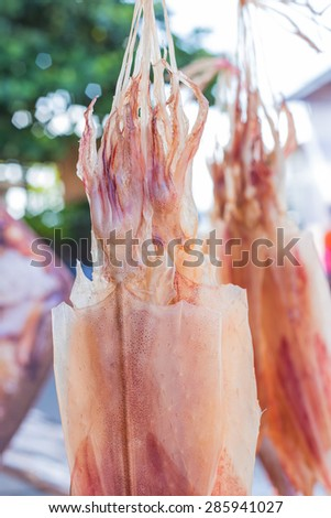 Drying squid by sun light, asia thailand - stock photo
