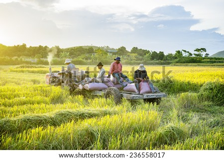 DUC TRONG, VIETNAM - NOV 6: Rice is winnowed on NOV 6, 2014 in Duc Trong,Vietnam. Vietnam can produce rice all year round due to which manages water supply system for farmers in the dry season. - stock photo