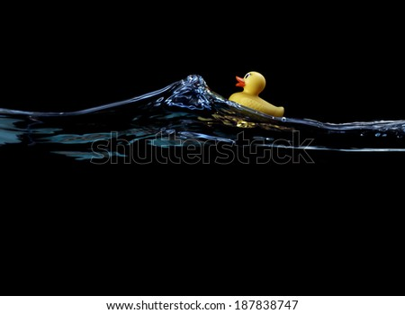 Duck Floating in Water - stock photo