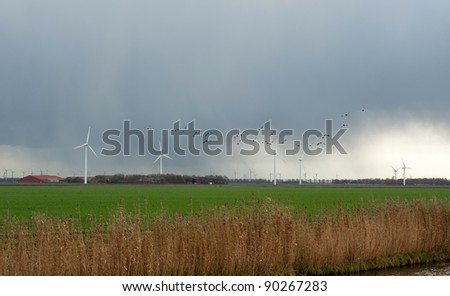 Ducks flying into deteriorating weather, Holland, Europe - stock photo