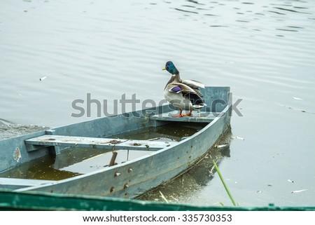 ducks in boat - stock photo