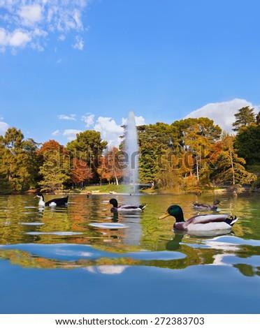 Ducks in pond near Crystal Palace - Madrid Spain - stock photo