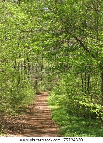 Duke Forest trail, Durham, NC - stock photo