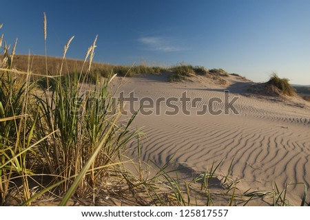 Dune grass and ripples in sand in morning light - stock photo