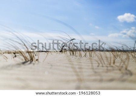 Dune Grass On Beach With Shallow Depth of Field - stock photo
