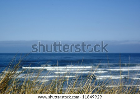 Dune grass with ocean surf in background - stock photo