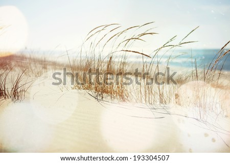 Dune Grasses on the beach - stock photo
