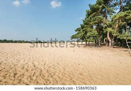 Dune landscape in summertime with a forest of Scots Pine or Pinus sylvestris trees on the side and hot yellow sand in the foreground. - stock photo