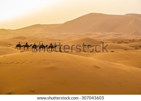 Dunes Erg Chebbi near Merzouga, Morocco -Camels caravane during a tour into the erg - stock photo