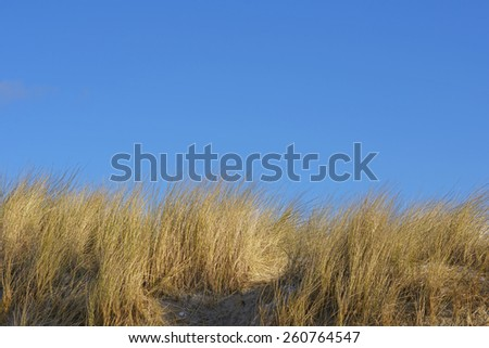 Dunes grass and clear blue sky North Sea island  - stock photo