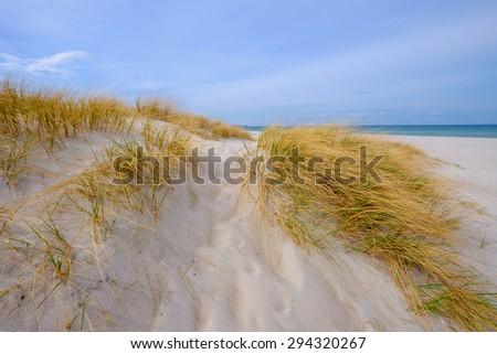Dunes nearby Prerow/Germany - stock photo