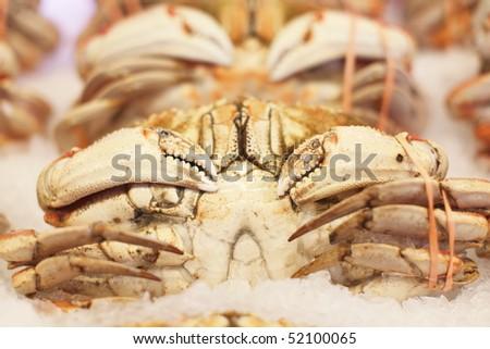 Dungeness crab at market. - stock photo
