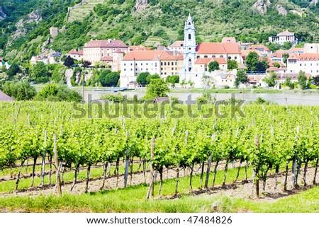 Durnstein, vineyard in Wachau Region, Lower Austria, Austria - stock photo