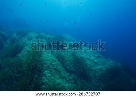 Dusky Grouper-Epinephelus marginatus - stock photo
