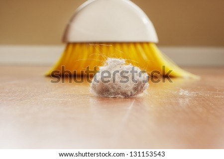 Dust Bunny - stock photo
