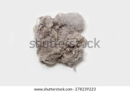 Dust bunny on a white background. House dust can produce allergies - stock photo
