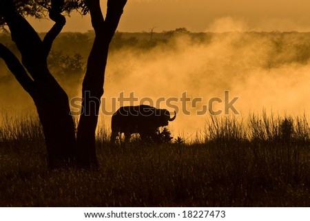 Dusty Baffalo under tree in the African savanna - stock photo