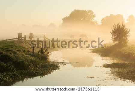 Dutch countryside: cows on a dike of a small river in during a foggy sunrise. - stock photo