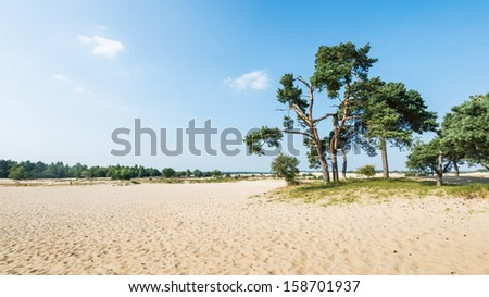 Dutch dune landscape in summertime with Scots Pine or Pinus sylvestris trees in the background and hot yellow sand in the foreground. - stock photo