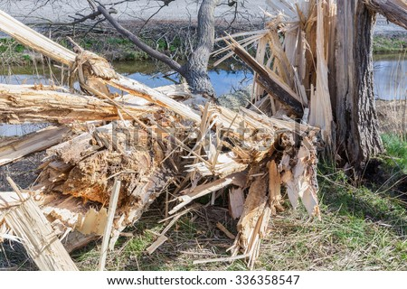 Dutch farmland with blown down tree after a heavy spring storm - stock photo