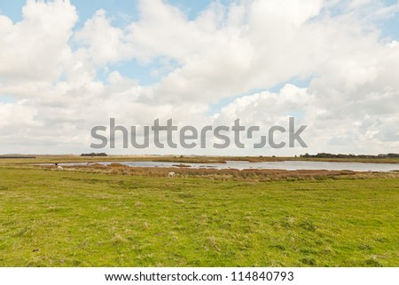 Dutch farmland with sheep and stormy blue cloudy sky. Puddle in field of grass. Wadden island. Texel. The Netherlands. - stock photo