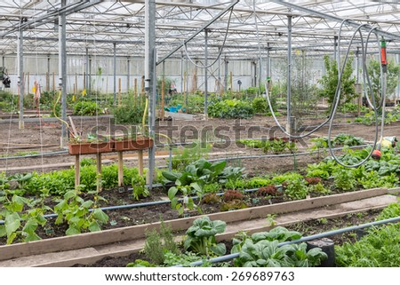 Dutch Greenhouse with several small community allot gardens - stock photo