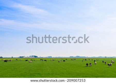 Dutch Landscape Grazing Cows - stock photo