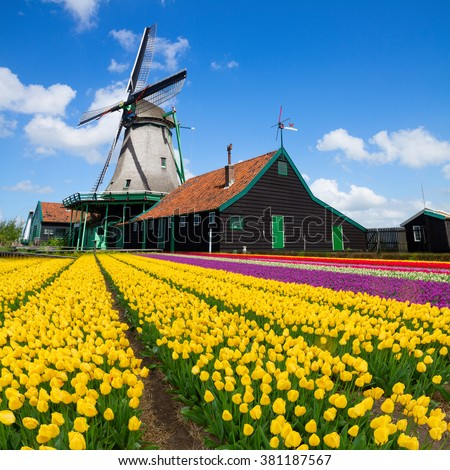 dutch windmill over colorful yellow tulips field , Holland - stock photo