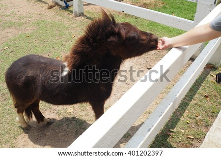 Dwarf horse - stock photo