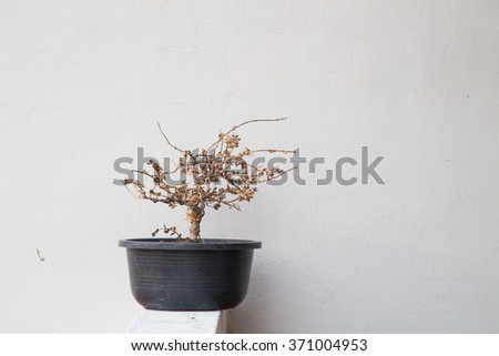dying tree - stock photo