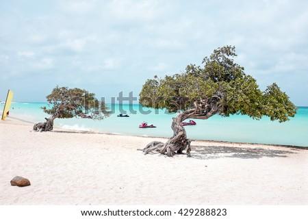Eagle beach on Aruba island in the Caribbean Sea - stock photo