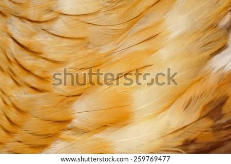 Eagle feathers  - stock photo