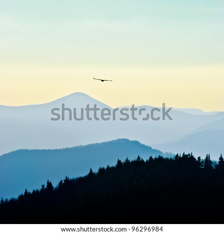 Eagle flying free above the trees and mountains - stock photo