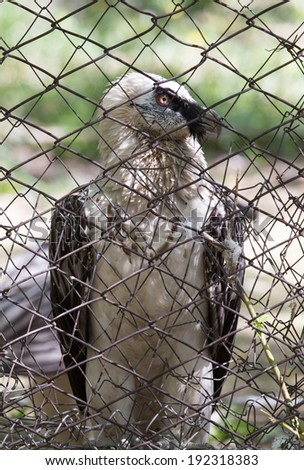 eagle in a cage - stock photo