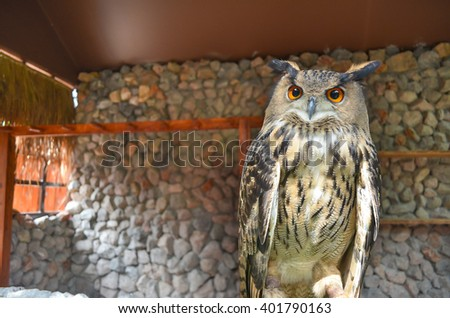 Eagle Owl/An eagle owl with blurred background. - stock photo