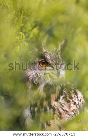 eagle owl between green bush - stock photo